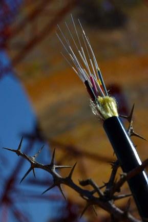 12-волоконные специальные оптические кабели Lapp