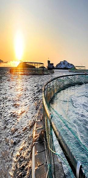 LAPP Norway (Miltronic) har levert sjøkabler til norsk havbruk i over 15 år